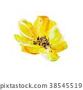 ดอกไม้,ดอกไม้บาน,เบ่งบาน 38545519