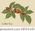 Coffee tree elements 38553145