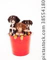 개, 강아지, 믹스견 38554180