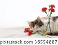 카네이션과 자기 고양이 38554887