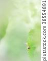 蝸牛 繡球花 樹葉 38554891