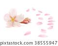 벚꽃 꽃잎 봄 배경 38555947