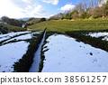 tea plantations, tea plantation, tea field 38561257