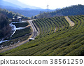 tea plantations, tea plantation, tea field 38561259