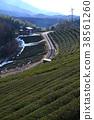 tea plantations, tea plantation, tea field 38561260