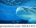 ปลาซันฟิช,ปลา,ปลาน้ำเค็ม 38561403
