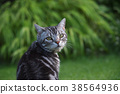 되돌아 고양이 38564936