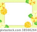 Primula frame 38566264