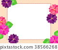 Primula frame 38566268