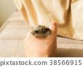 動物 倉鼠 短尾侏儒倉鼠 38566915