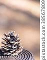 솔방울, 열매, 가을 38567809