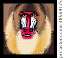 Portrait of a mandrill primate 38569175