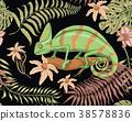 chameleon, vector, lizard 38578836