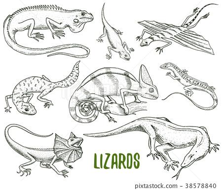 Chameleon Lizard, green iguana, Komodo dragon 38578840