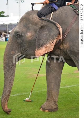 Elephant Polo  38582612