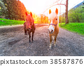 Two nice horses in the middle of a dirt road. 38587876