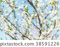 Beautiful blooming Apple trees in spring on Sunny 38591226