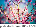 Beautiful blooming peach trees in spring on Sunny 38591228