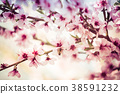 Beautiful blooming peach trees in spring on Sunny 38591232