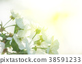 Beautiful blooming Apple trees in spring on Sunny 38591233