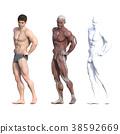 男性解剖學肌肉3DCG例證材料 38592669