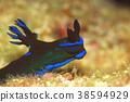 海参 海中珍宝鱼 海底的 38594929