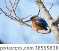 bird, birds, fowls 38595638