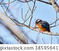 bird, birds, fowls 38595641
