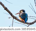 bird, birds, fowls 38595645