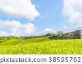 [시즈오카 현] 후지산과 차밭 38595762