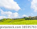 [시즈오카 현] 후지산과 차밭 38595763