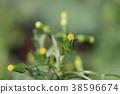 ดอกไม้ Novologic 38596674