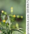 ดอกไม้ Novologic 38596675