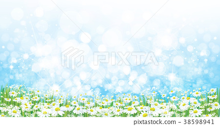 Vector nature  background, daisy  flowers field. 38598941