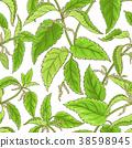 nettle, plant, green 38598945
