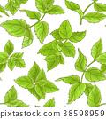 mint, peppermint, leaf 38598959