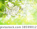 Spring  blossoming tree. Spring background. 38599012