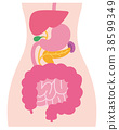 消化系統健脾體 38599349