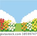 Illustration material of tulip field 38599747