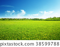 field of spring flowers and perfect sky 38599788