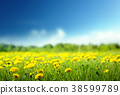 field of spring flowers and perfect sky 38599789