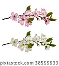 Set of Blossoming cherry branches 38599933