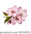 Spring pink sakura blossoms 38599935
