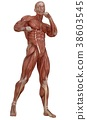 Male body without skin, anatomy and muscles 3d 38603545