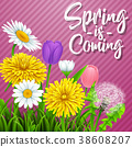 Spring is coming. Beautiful meadow flowers on stri 38608207