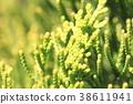 삼나무 꽃가루 38611941