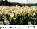 ดอกไม้,ทุ่งดอกไม้,แปลงดอกไม้ 38612196