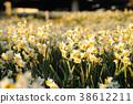 ดอกไม้,ทุ่งดอกไม้,แปลงดอกไม้ 38612211