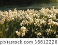 ดอกไม้,ทุ่งดอกไม้,แปลงดอกไม้ 38612228
