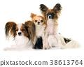 three littles dogs 38613764